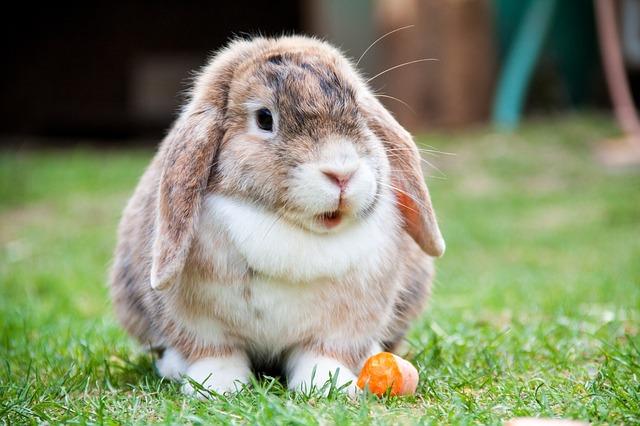 králíček s mrkví
