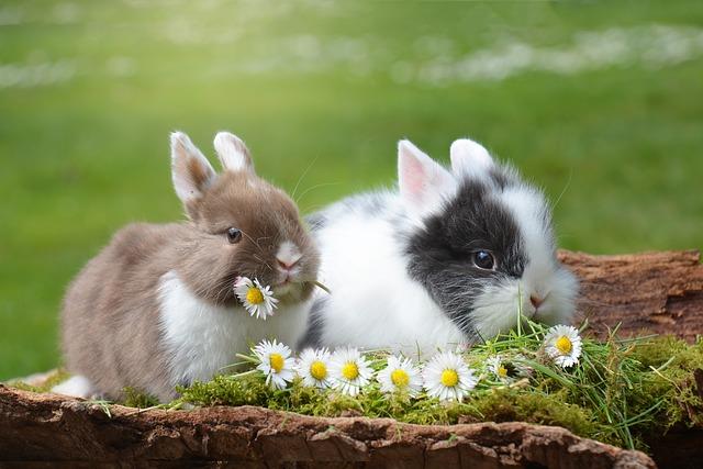 dva králíčci